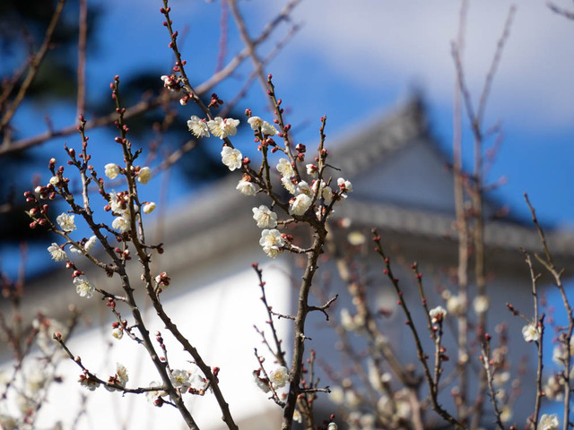 小田原街景9