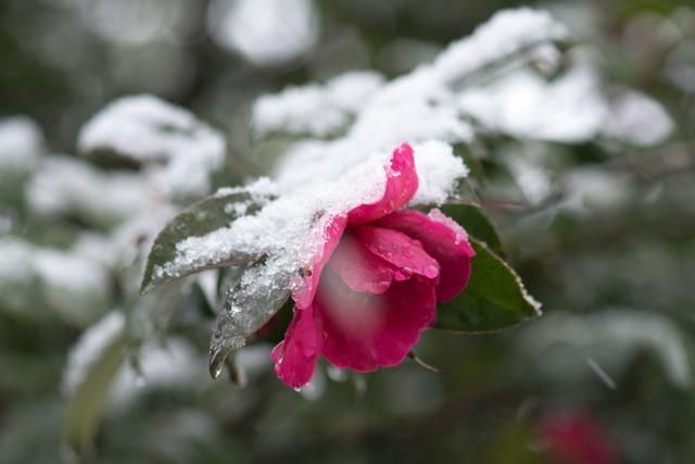 雪景色87