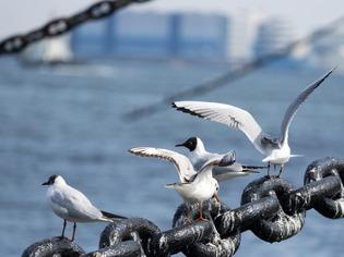 横浜港20
