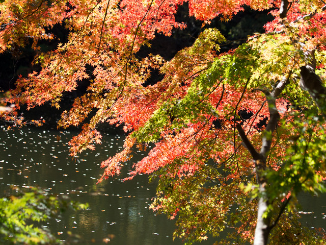 震生湖25