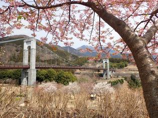 秦野戸川公園12