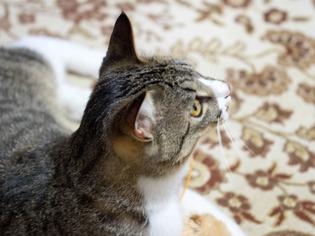 0504愛猫21