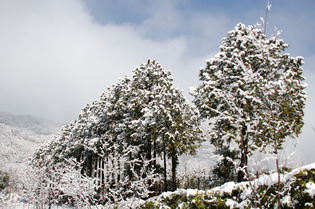 雪景色97