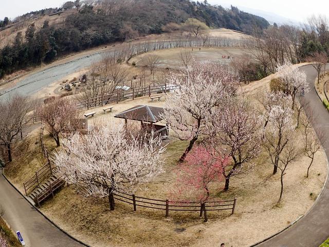 秦野戸川公園1