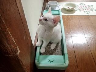 愛猫達19