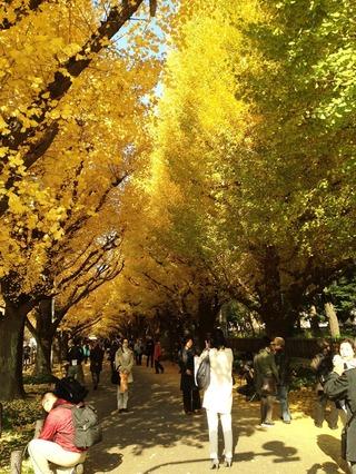 外苑の銀杏並木