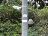 新潟の電柱