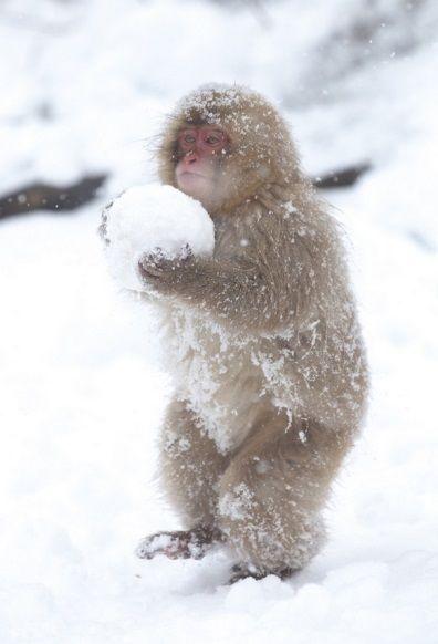 36JQobidGw9iLrLMI4lZ_monkey