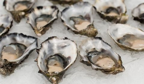 oysters-2220607_960_720