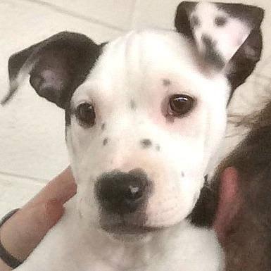 rescue-puppy-selfie-3