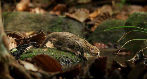 worlds-smallest-cat-4