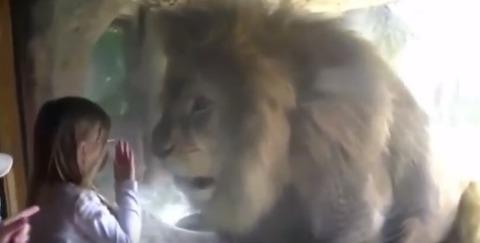 lion112