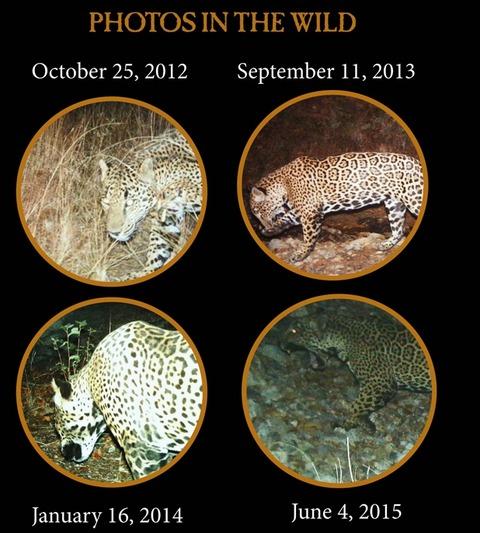 JaguarInfographic3