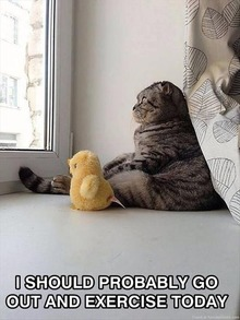 funny-cat-pictures-i-should-probably-exercise