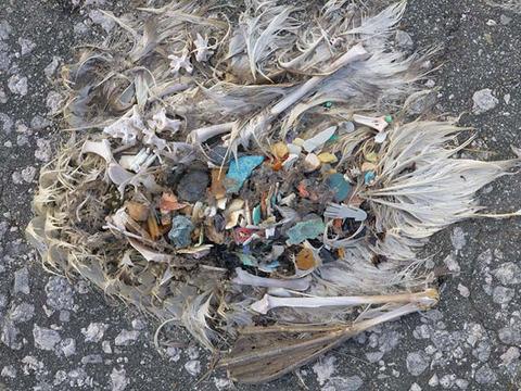 plasticbird_nextnature_530_3