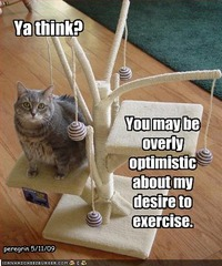 funny-pictures-cat-does-not-want-to-work-out_zps3c51642d