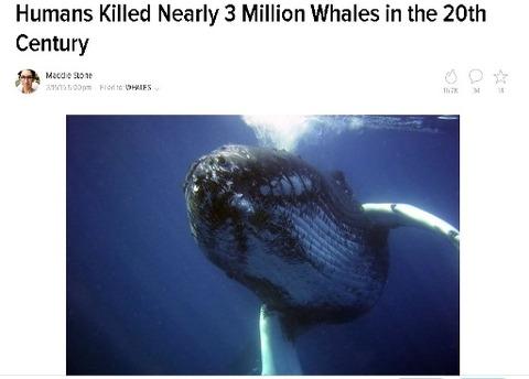 whale22