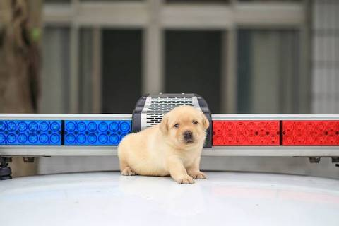 police-puppy-photoshoot-10