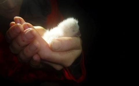 kakapo1