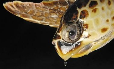 sea-turtle01-loggerhead_25480_600x450