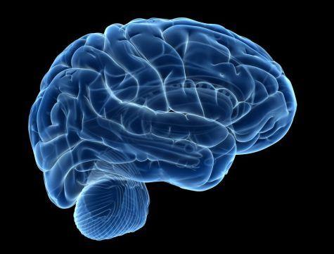 opioids_brain_G
