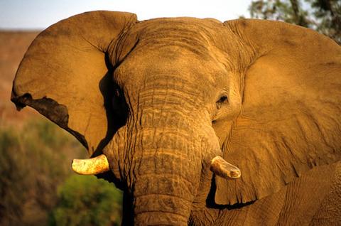 Elephant_fs
