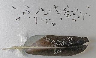 archaeopteryxWEBwm