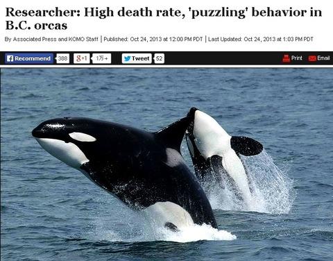 orca24