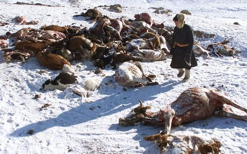 Harsh-winter-in-Mongolia