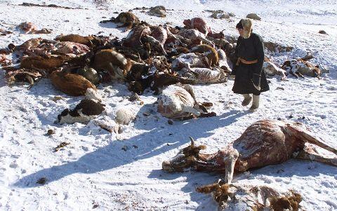 Harsh-winter-in-Mongolia