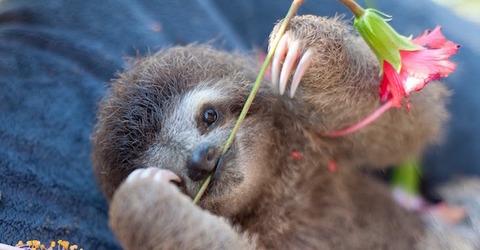 slothinstitute10