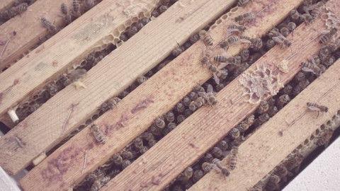 mcdonalds-beehive-mchive-nordddb-5