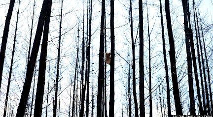 o-KOALA-FOREST-900