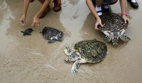 sea-turtles-release