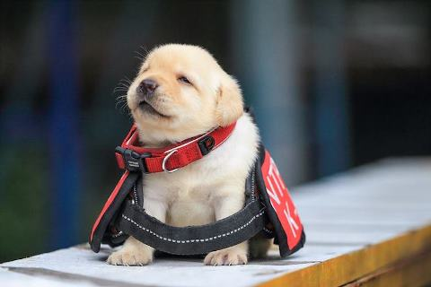 police-puppy-photoshoot-8