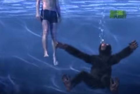 chimp45