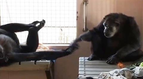 chimopp