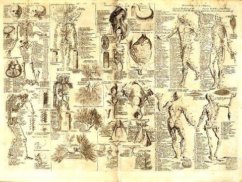 Anatomical_chart,_Cyclopaediwiki