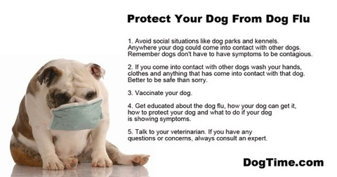 file_21421_dog-flu-protect