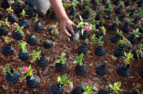 tear-gas-flower-pots-palestine-7
