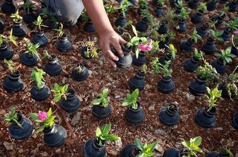 tear-gas-flower-pots-palestine-7