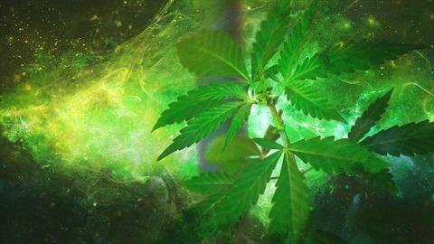cannabis-neuroprotective