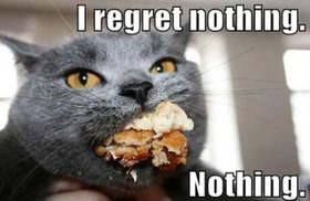 Cat-dont-regrets