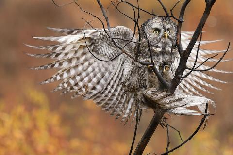 2017-audubon-pho