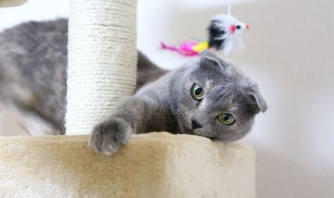 cat-1684255_1280