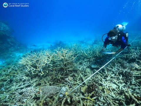 Scientists-measure-coral-mortality-following-bleaching-north