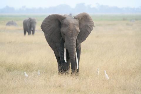 elephant-605275_1280