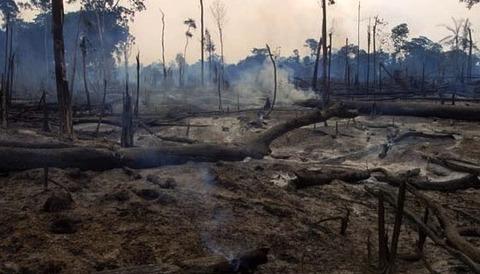 brajildeforest