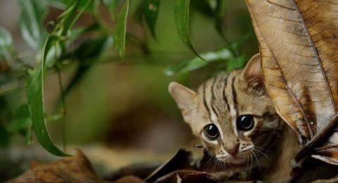 worlds-smallest-cat-7