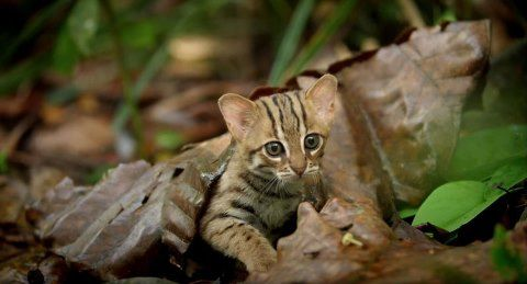 worlds-smallest-cat-3